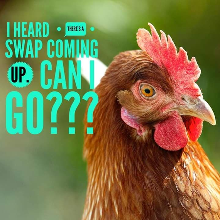 Flock Swaps canceled til Virus precautions are lifted